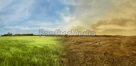 landscape of meadow field with the