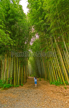 looking up into a bamboo forest