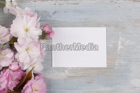 romantic spring background