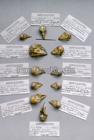 darwins finches skulls and id labels