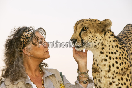person with cheetah chewbaaka acinonyx jubatus