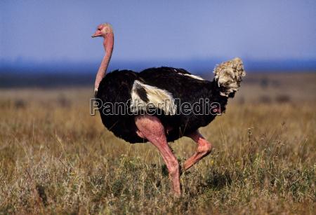 zwierze ptak afryka kenia poziome poziomo