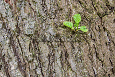 tree trunk with young shoots