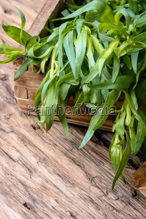 plant fresh tarragon twig