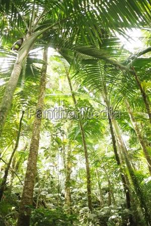caribbean islands saint lucia tropical forest