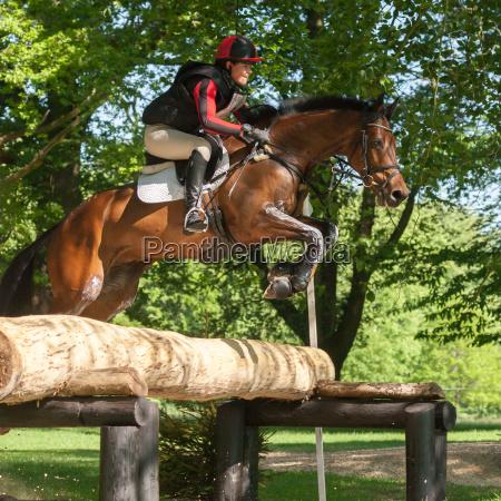 houghton international horse trials loretta joynson