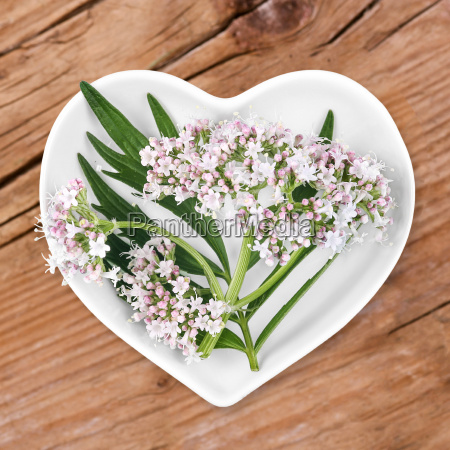 valerian homeopathy with medicinal herbs