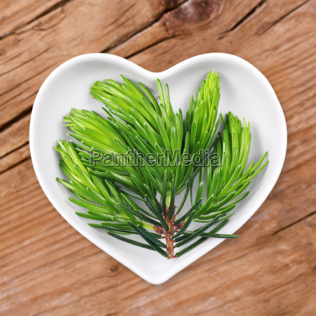 spruce homeopathy with medicinal herbs