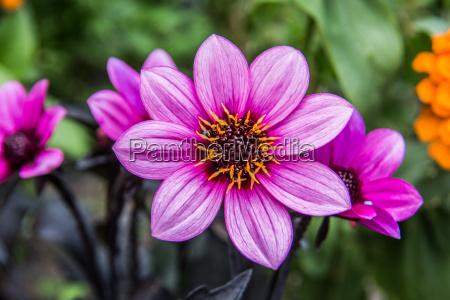 wild herbs with purple flowers