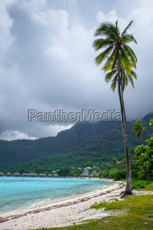 palm trees on temae beach in