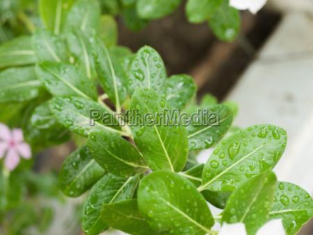raindrops on leaves under sunlight