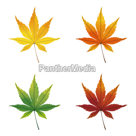 colorful maple leaves watercolor effects