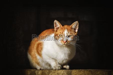 cat on the dark background