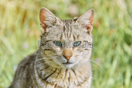 portrait of homeless cat