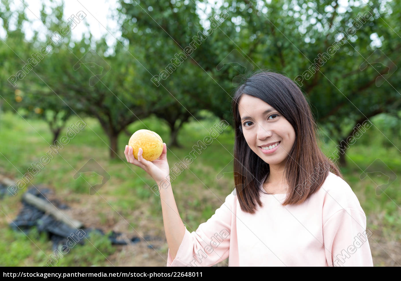 woman, picking, a, pear, in, a - 22648011