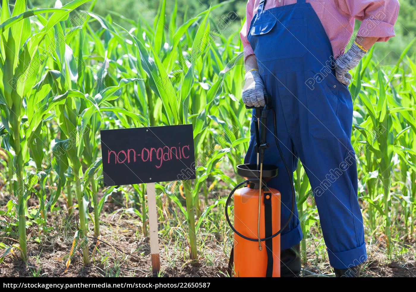 non-organic, corn, field - 22650587