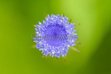 macro on top of small flower