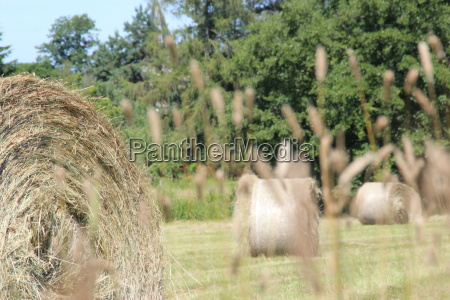 hay bales on the summer meadow