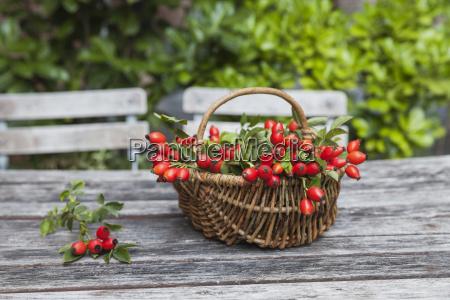 wickerbasket of rosehips on garden table