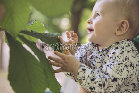 baby touching large leaf of chestnut