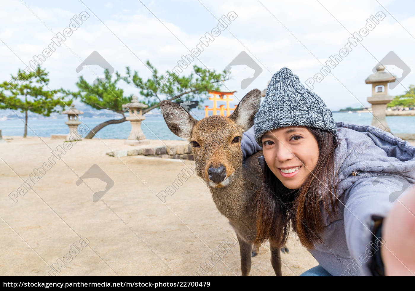 woman, taking, photo, with, deer, in - 22700479