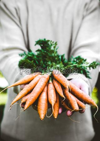 fresh, carrots, and, farmer - 22705341