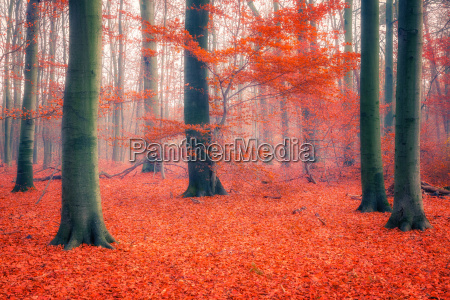 colorful, autumn, forest - 22719061