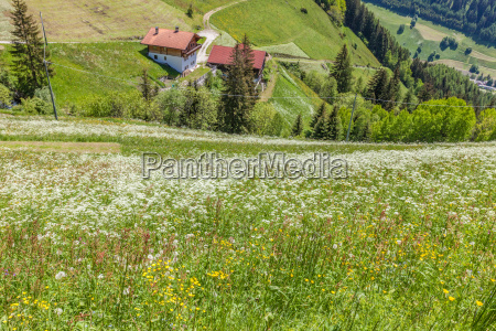 flower meadow on the steep slope
