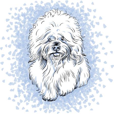 vector white cute dog bichon frise