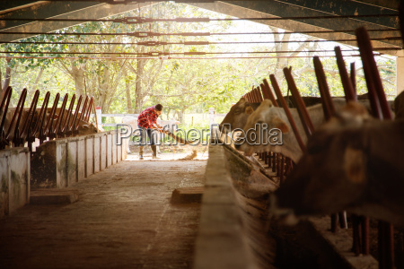 man cleaning farm farmer sweeping stables