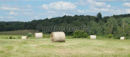 farm hay bales country field meadow