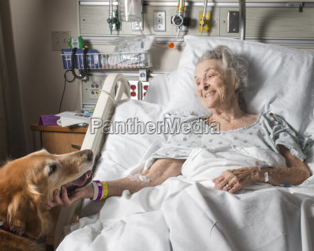 caucasian woman in hospital petting therapy