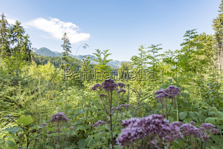 wild herbs in front of a