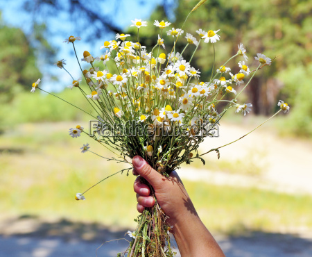 female hand holds a bouquet of