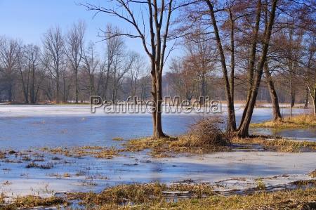 spreewald, in, winter, -, spreeforest, in - 22786609