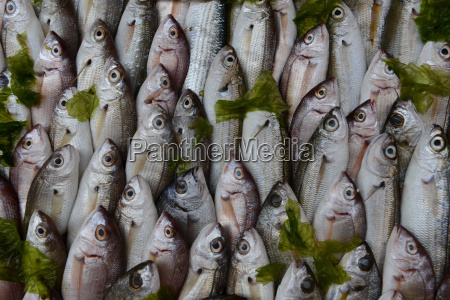 fish on ice for sale in