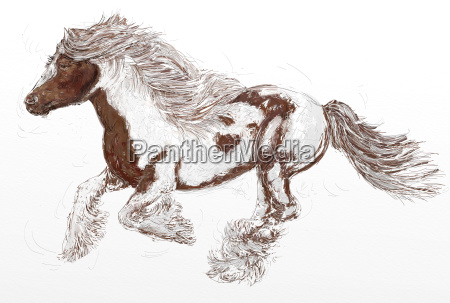 galloping horse with thick mane