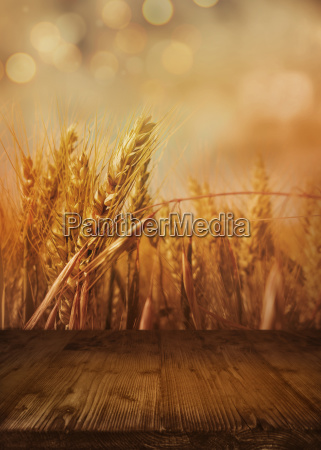cornfield in autumn with wooden table