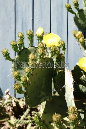 cactus in front of board wall