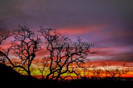 fire sky tree silhouette