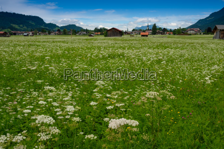 flower meadow with health resort oberstdorf