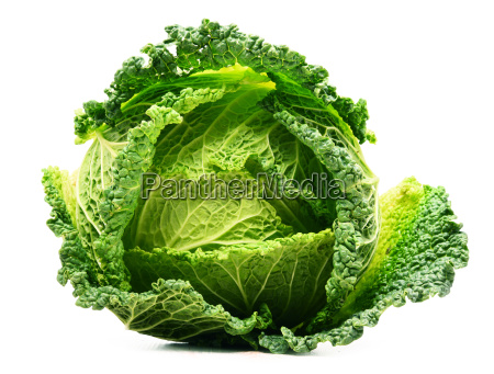 fresh organic cabbage head isolated on
