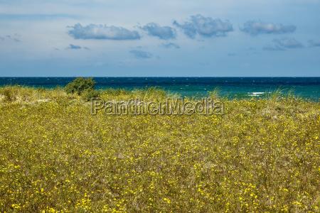 beach at the baltic sea near