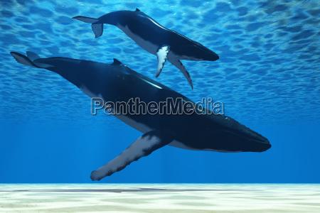 humpback mother