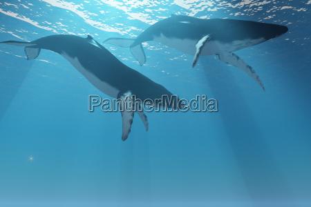 whale pair