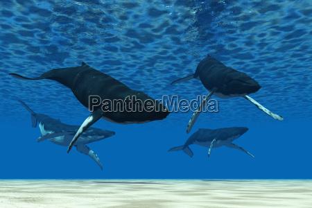 whale swim