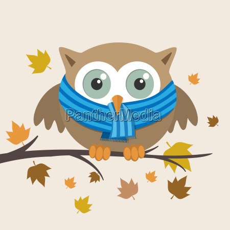 male owl with scarf on a