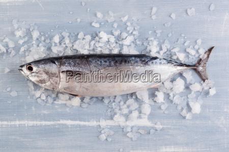 fresh tuna fish on ice
