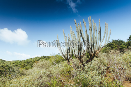 arid landscape with organ pipe cactus