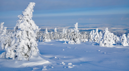 winter, on, the, brocken, in, the - 22942827